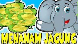 Lagu Kanak Kanak Melayu Malaysia MENANAM JAGUNG Planting Corn Malay Rhyme Malaysian Kids Songs