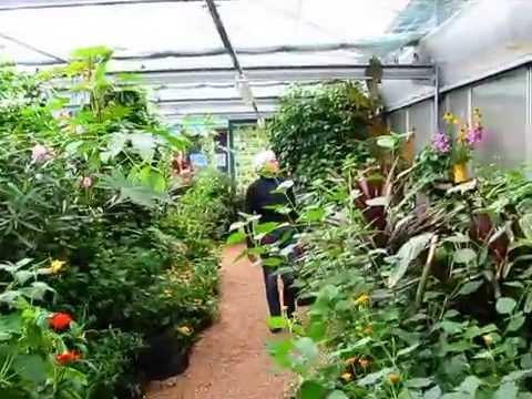 Vlinderkas Van Botanische Tuin De Uithof In Utrecht Huis Design 2018 Beste Huis Design 2018 [somenteonecessario.club]
