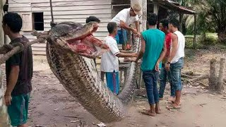15 World's Biggest Snakes Ever Found