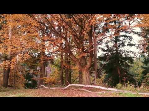 Salomon - Pāli Canon || Instrumentales