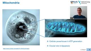 [Giorgia Pastorin] Nanomedicines to Deliver Dual-Targeting Dual-Action Anticancer Drugs