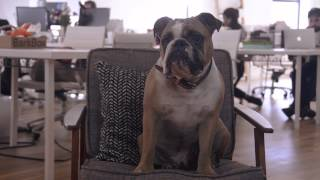 """""""The Pawffice"""" Episode 1: Frank"""