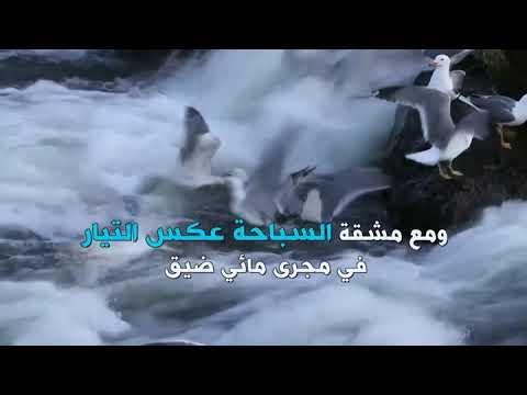 هجرة أسراب من أسماك البوري إلى المياه الدافئة في بحيرة تركية  - 18:54-2019 / 5 / 22