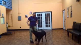San Antonio Dog Training Co. Capone