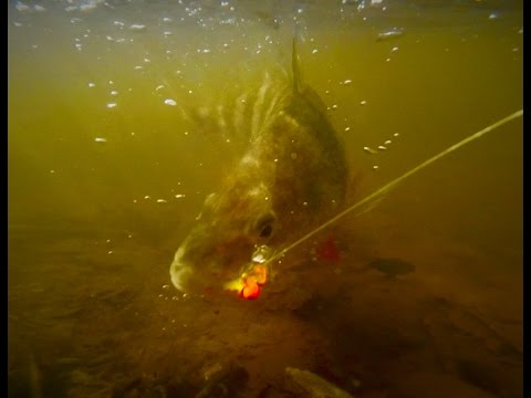 How To Catch Perch And Crappie On A Float And Fly