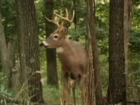 Time Shadows: Encounters with the Whitetail  (1987)
