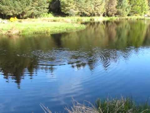 Annamoe Fishing