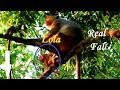 MILLION SORRY ! Baby Monkey Lola Real Fall Down From The Tree | What My Big Concern Happened