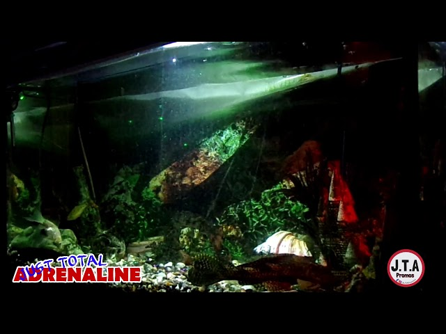 Fish Swimming - 4K Quality Video of fish swimming in our tank with relaxing music www.JTAPromos.net
