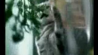 Kuklachev Cats Work / Whiskas Comercial (5)