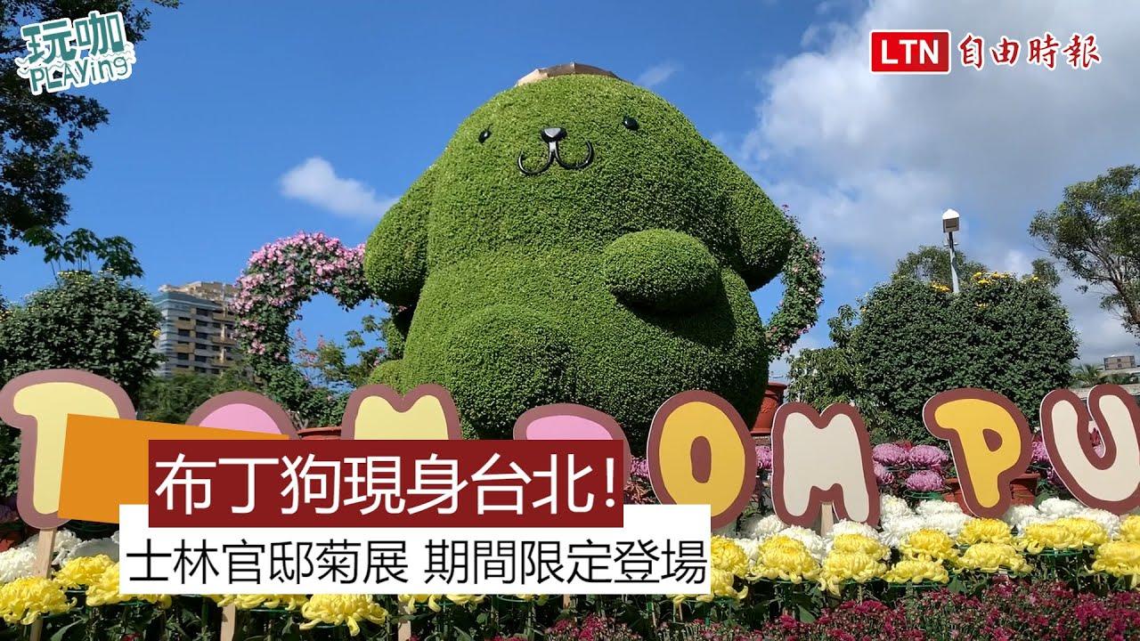 2.5公尺巨型布丁狗曝光!士林官邸菊展期間限定登場