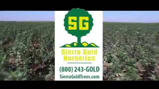 Sierra Gold Nurseries - Company Video