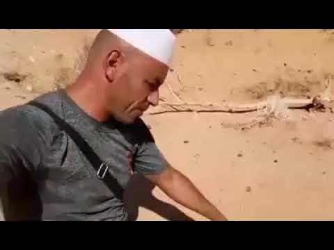 هذه الأفعى الرملية ذات القرنين والمعروفة في كامل صحراء الجزائر فيديوا من صحاري غرداية