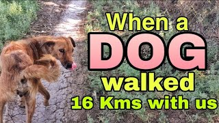 When a Dog walked 16 Km with us   Narmada Parikrama   Day 76 part 1