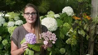Exploring Different Hydrangea Species