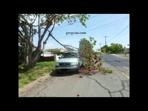 How To Raise Your Car Insurance Premiums - Falling Tree Branches