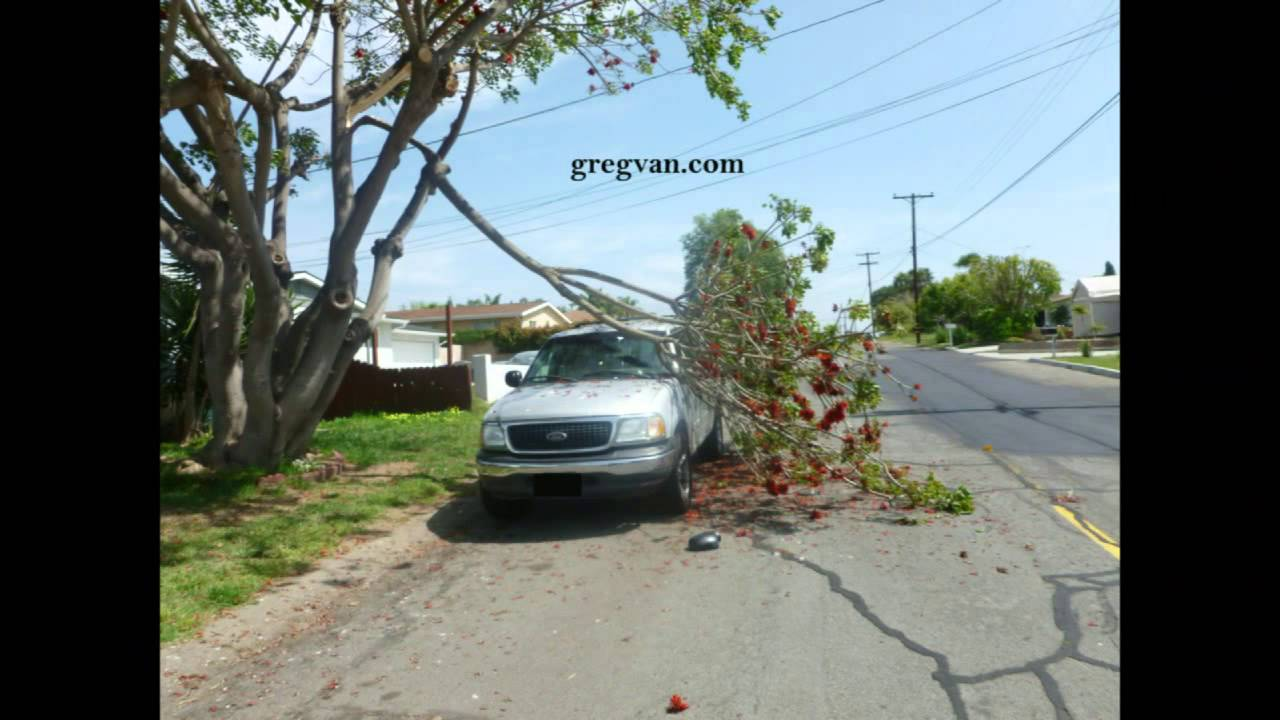 How To Raise Your Car Insurance Premiums Falling Tree Branches