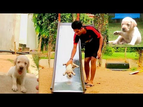 We Bought A New Dog | This Labrador Puppy Is The Cutest | Hyderabad