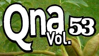 QnA vol. 53 - Portentious
