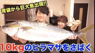 驚愕!!10kg越えヒラマサを豪快にさばいたら腹から巨大魚出現したんですけどwwww