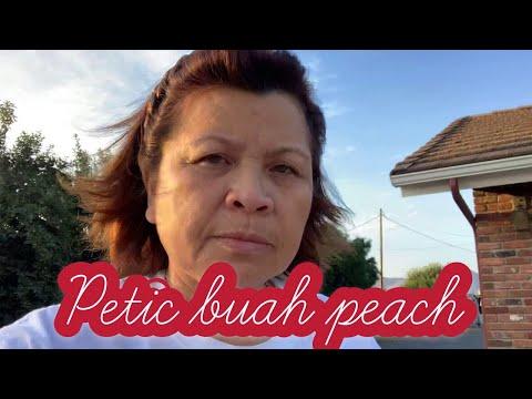 Pagi Indah//Petik Buah Peach