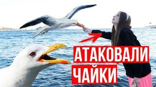 Запрыгнула в ЕДУЩИЙ трамвай! 5 образов на 5 локаций! Lookbook 🐞 Afinka