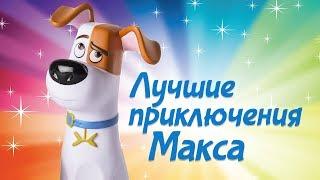 Тайная жизнь домашних животных. Приключения Макса. Сборник