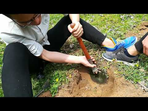 soil sampling from the different layers of soil