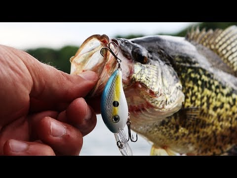 This MICRO Crankbait Is AWESOME For Crappie | TINY Lure CHALLENGE