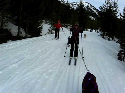 Skijoring in Teton Valley
