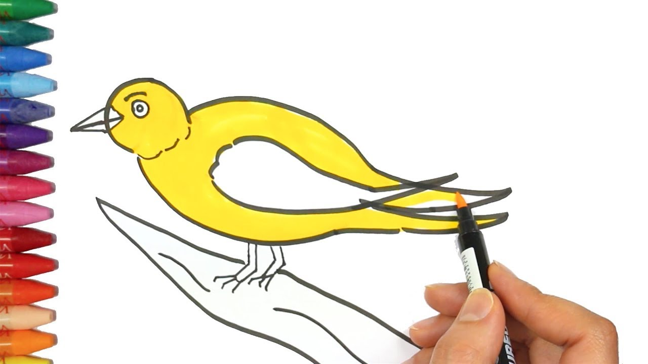 how to draw a canary bird how to draw and color kids tv youtube