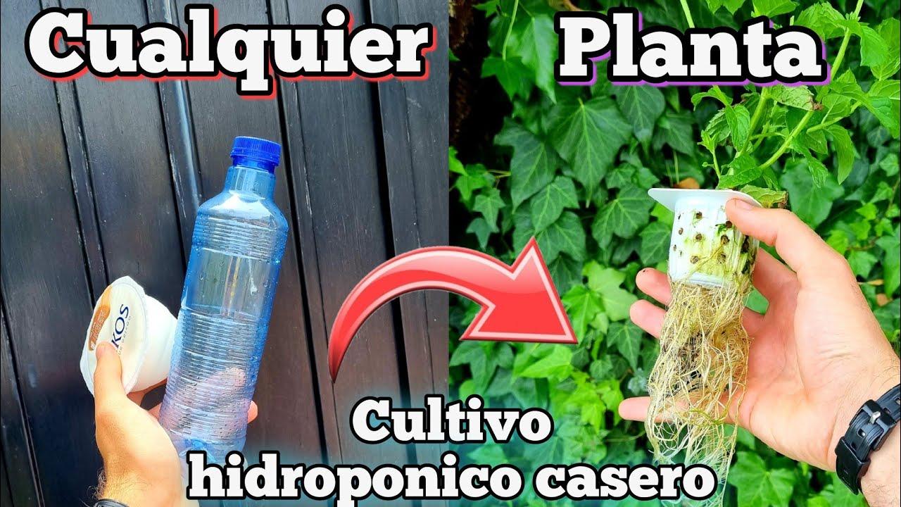 CULTIVA cualquier PLANTA en AGUA! Cultivo hidroponico casero para HUERTO urbano (Fresa hidroponica)