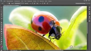 Уроки фотошопа (Photoshop) Зинаиды Лукьяновой. Урок 1.2