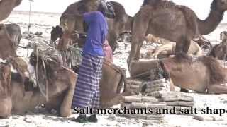 Ethiopia-Danakil Desert.Spectacular scenes of Salt Caravans and Afar people