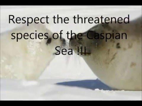 Threatened Species of the Caspian Sea