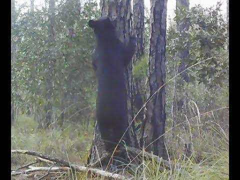 GEORGIA PUBLIC LAND BEAR HUNT: My First EVER Bear Hunt!
