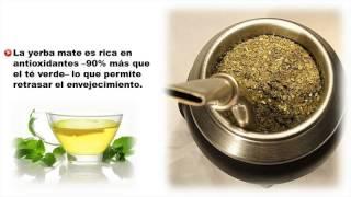 Beneficios Del Mate - Beneficios De La Yerba Mate