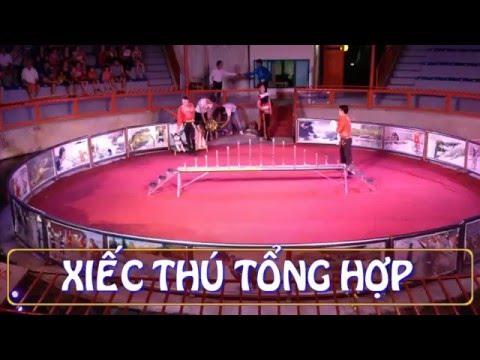 Xiec thu tong hop
