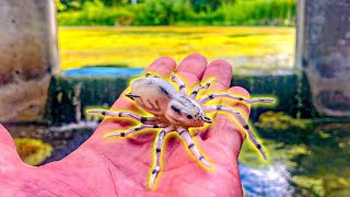 Fishing The SPIDER LURE In SEWER Water!!! (ICAST 2019 WINNER)