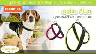 Ошейники, поводки и шлейки для собак · Ferplast Ergocomfort · Зоомагазин Зверушка