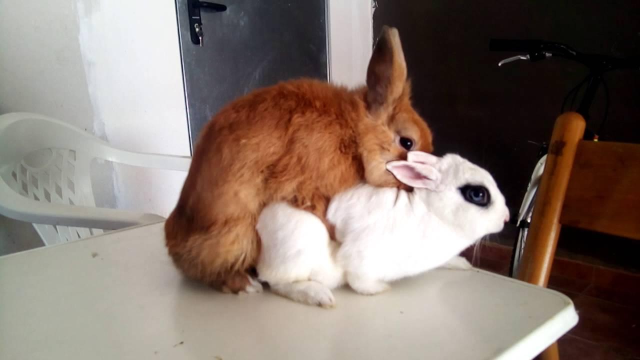 la reproduccion de mis conejos youtube