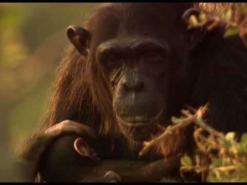 Download Relatively Speaking - Nature's Greatest Moments S03E12 - The Secrets of Nature
