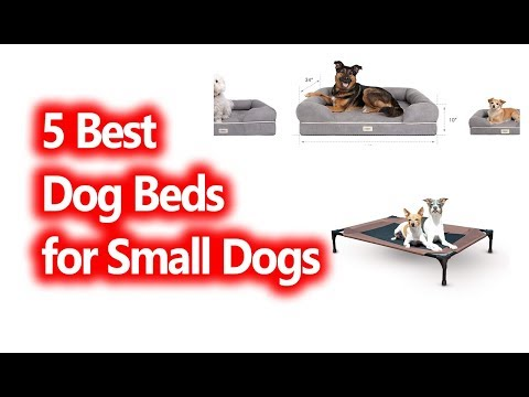 best-dog-beds-for-small-dogs-buy-in-2019