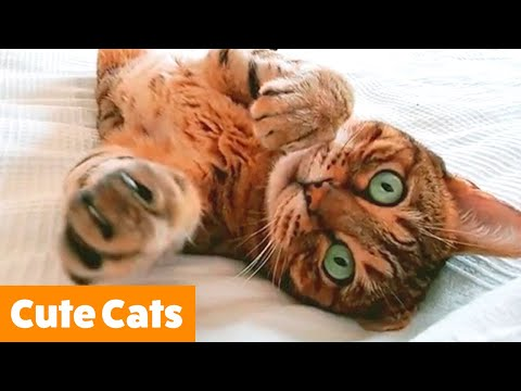 Adorable Silly Cats | Funny Pet Videos