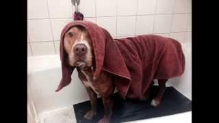 Santa Barbara Shelter Dog Vince