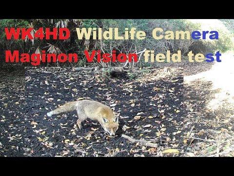🐾Wildlife hunting Camera demo (WK4 HD by Maginon Vision ALDI)