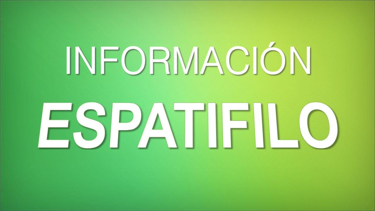 Informaci n espatifilo spathiphyllum wallisii for Cuidados de la vinca