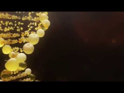 KNOW GMO Project: Trailer #1