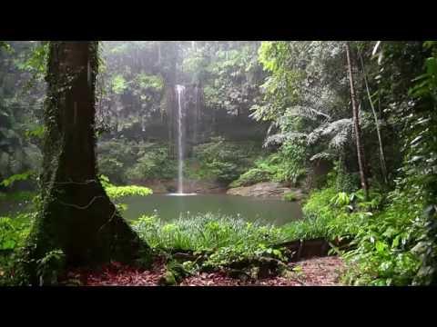 Magnifique Surat Al-Ĥijr avec Pluie et les Sons de la Forêt  -  Pour Se Détendre , Méditer Et Dormir