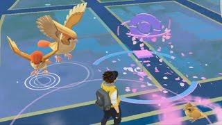 Pidgeot Full Evolution Chain Spawn! Pidgeot + Pidgeotto + PIDGEY Family Spawned Together Pokemon GO